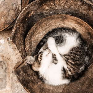 Genki Pet For healthier happier pets and their people cat asleep relaxing in earth bowls