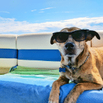 Genki Pet Aromatherapy for pets and their people dog on holidays wearing sunnies
