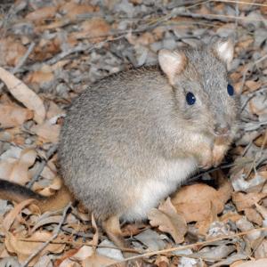 genki pet for healthier happier pets and their people donates to Australian Wildlife Conservancy