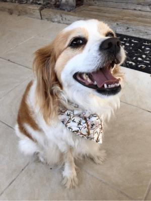 Healthier happier pet Buddy Stillness and Calm Genki Pet