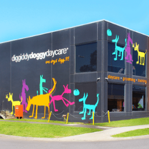 Doggy daycare south melbourne anxious hyperactive calming