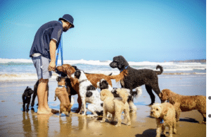 Hairy Hounds Playground Williamstown excursion beach dogs healthy happy with carer
