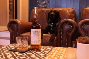 For healthier happier pets black dog on couch dog friendly whisky bar relaxing