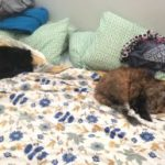 Healthier Happier Pets and their people Two cats asleep on floral bedspread with pillows behind