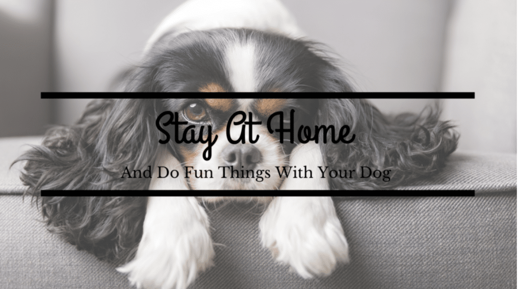 Cute dog relaxing over couch stay home