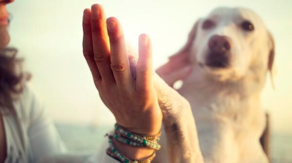 Cute labrador dog high fiving owner's hand in healthy sunshine