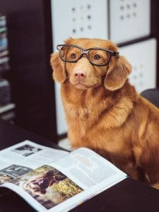 dog with glasses on at work genki pet